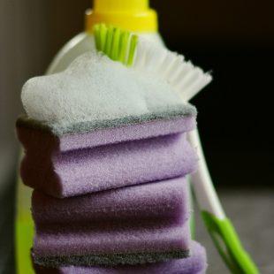 sponge-2546126_1280
